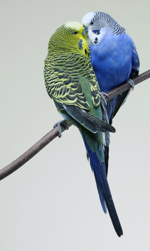 Category Birds Colorful Parrot Love