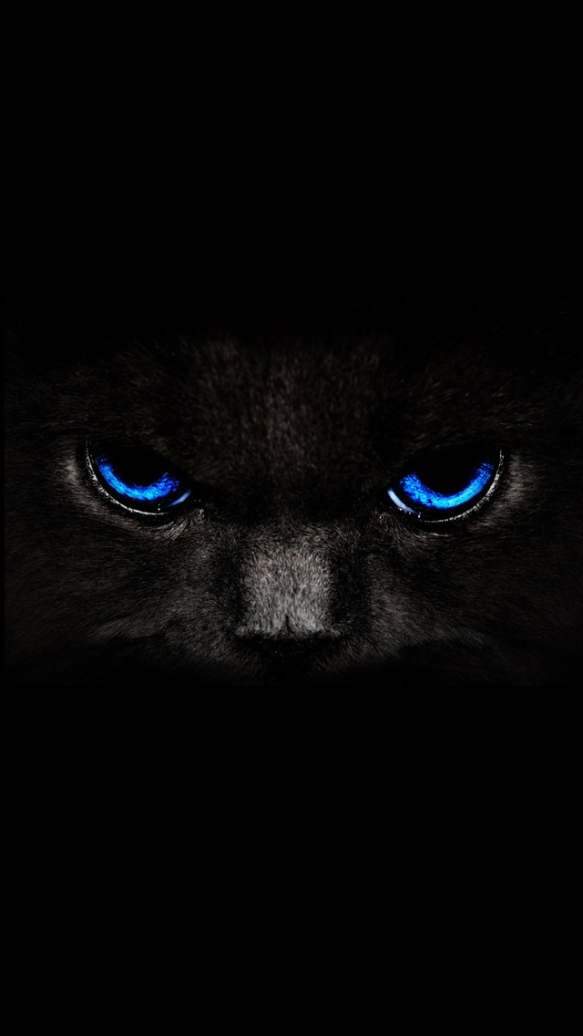 Black Cat Blue Eyes