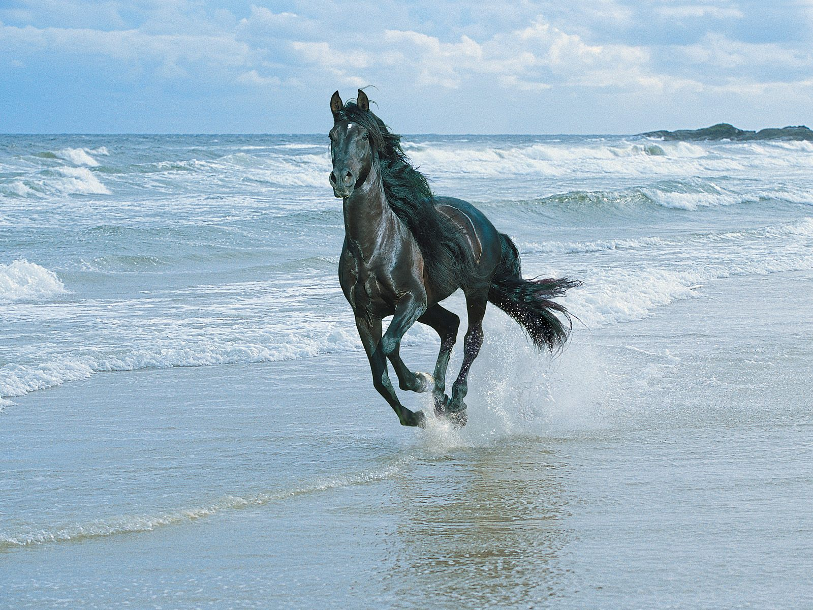 Horse Mobile Wallpapers - photo#12