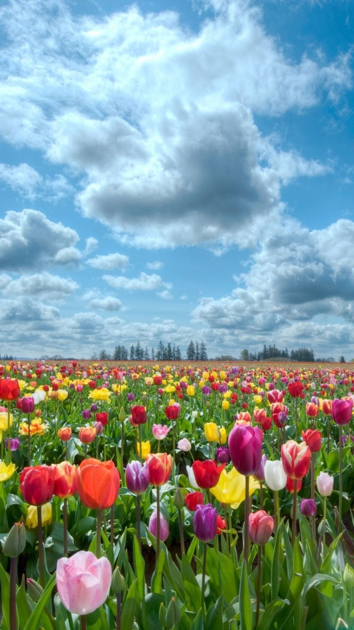 Wallpaper download nokia 5233 - Colourful Flower Field