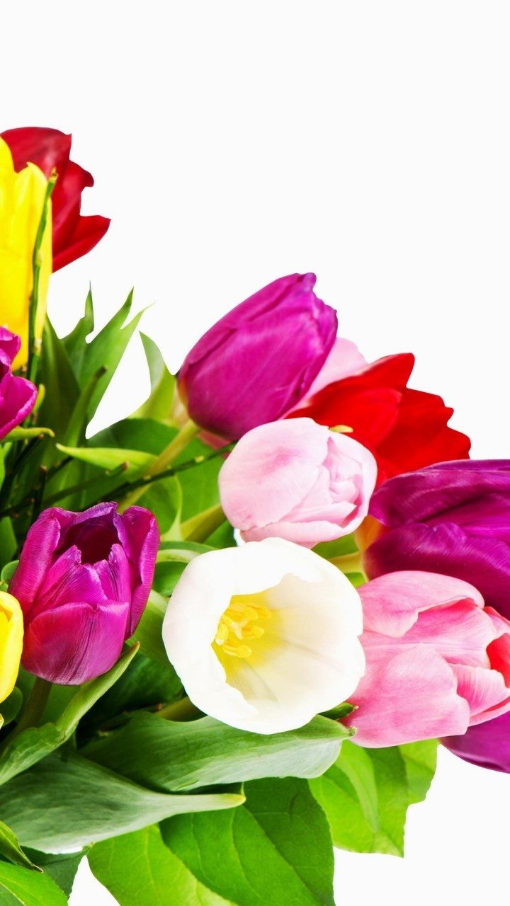Beautiful Colourful Flowers Wallpapers Colourful Flower Wallpaper