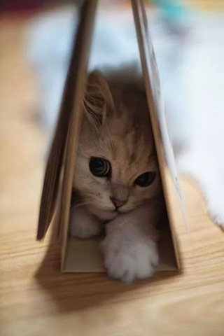 Cute Kitten in Calendar