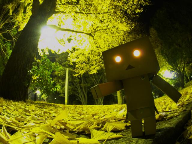 Danbo in Forest