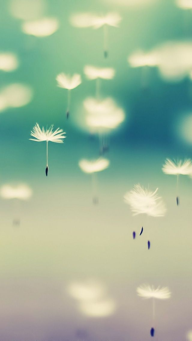 Dandelion iPhone Wallpaper