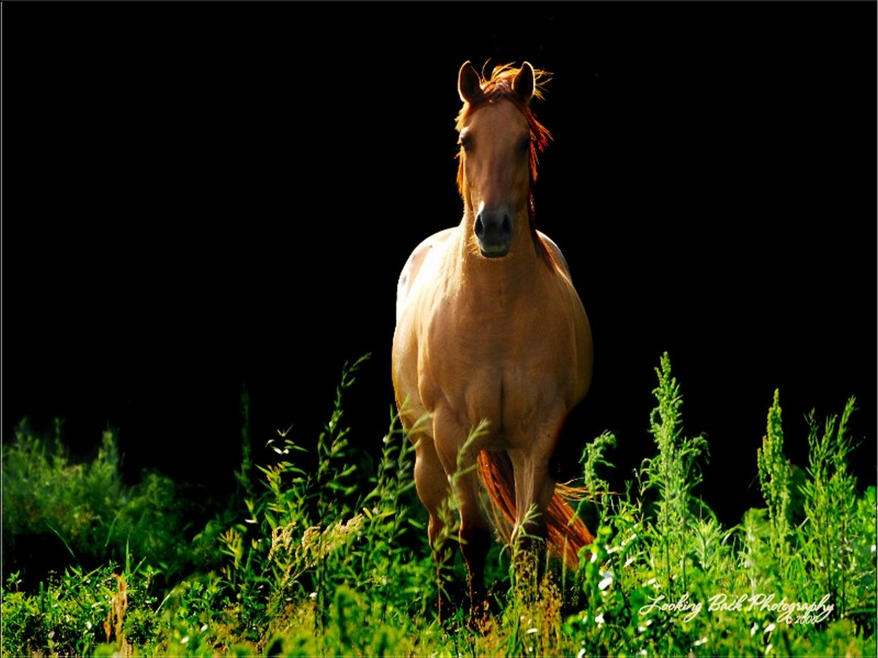 horse mobile wallpapers
