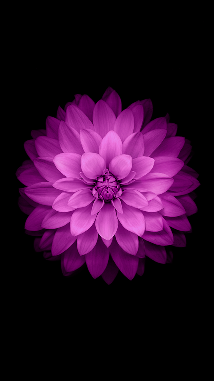 Zte Logo Png Beautiful Lotus iPhone...