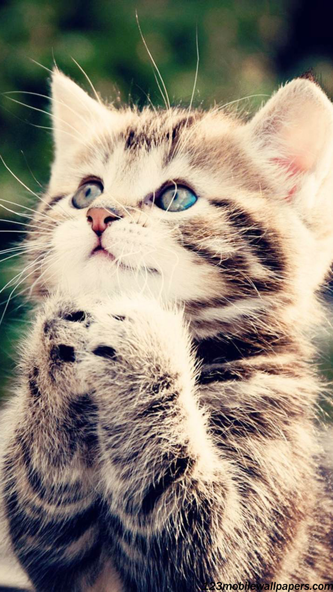 Cute Kitten Praying To God