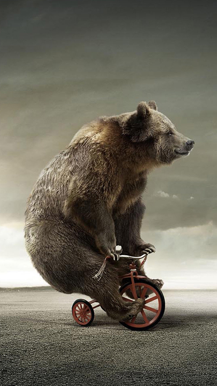 Funny Tricycle Bear
