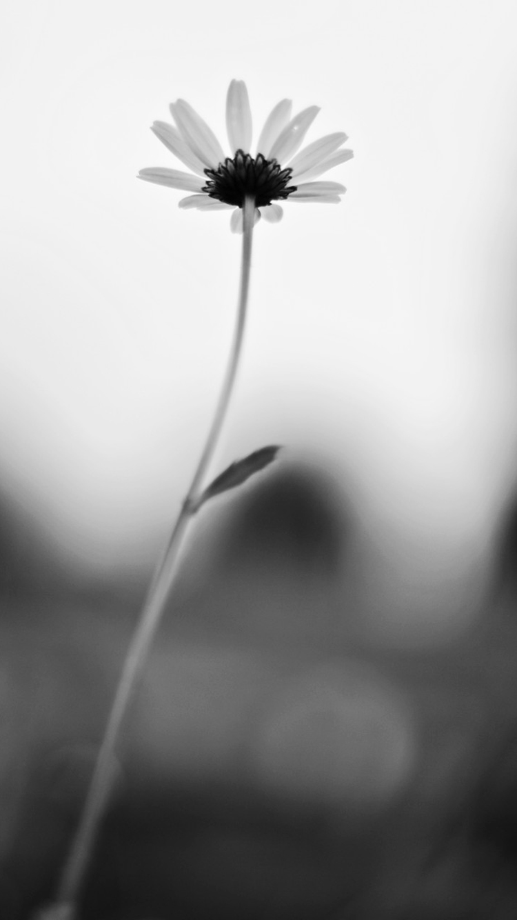 Monochrome Flower Picture