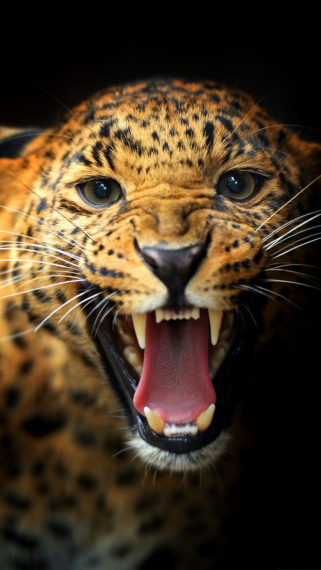 Angry leopard wallpaper - Phone animal wallpapers ...
