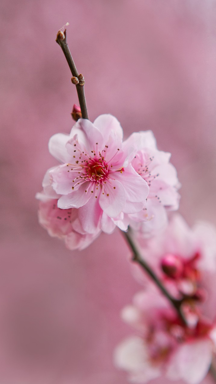 Beautiful Light Pink Flower Wallpaper