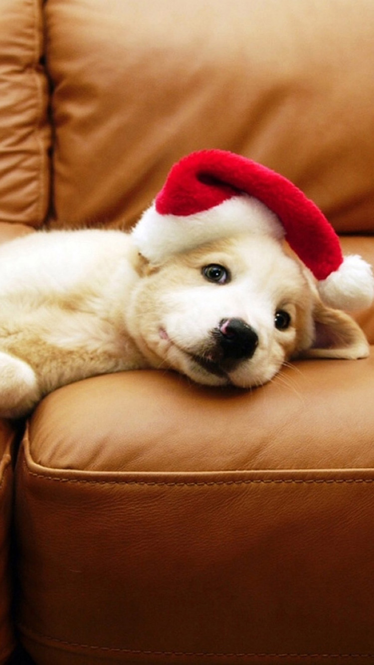 Christmas Puppy Wallpaper