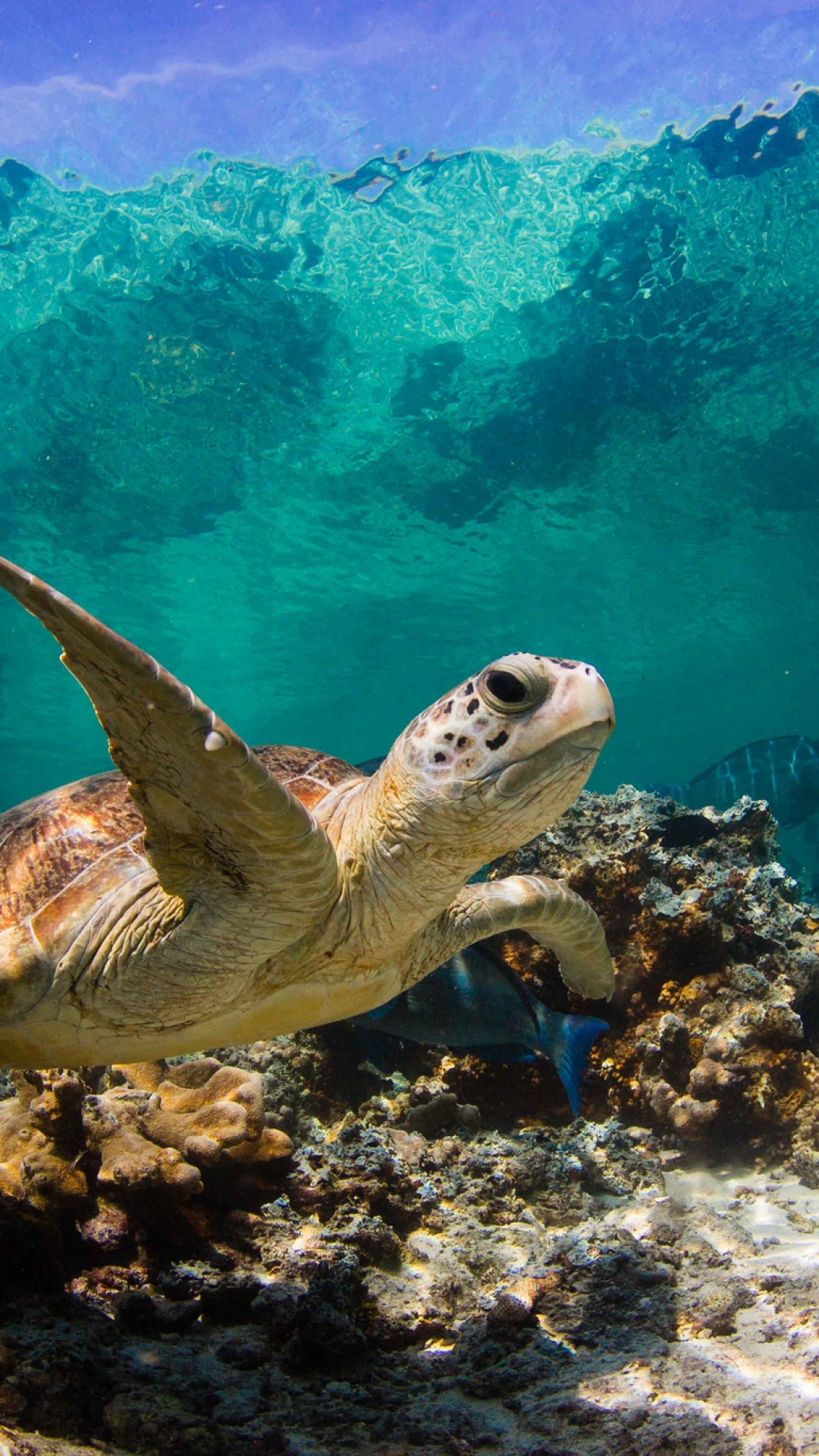 Turtle In Ocean Water