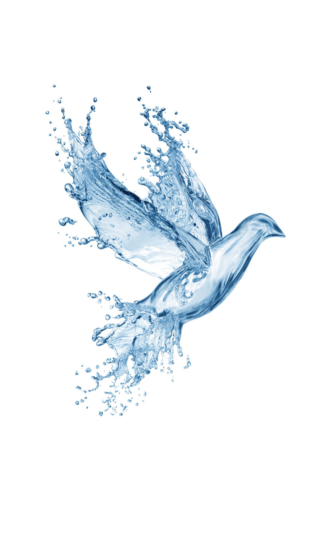 Water Splash Bird Wallpaper