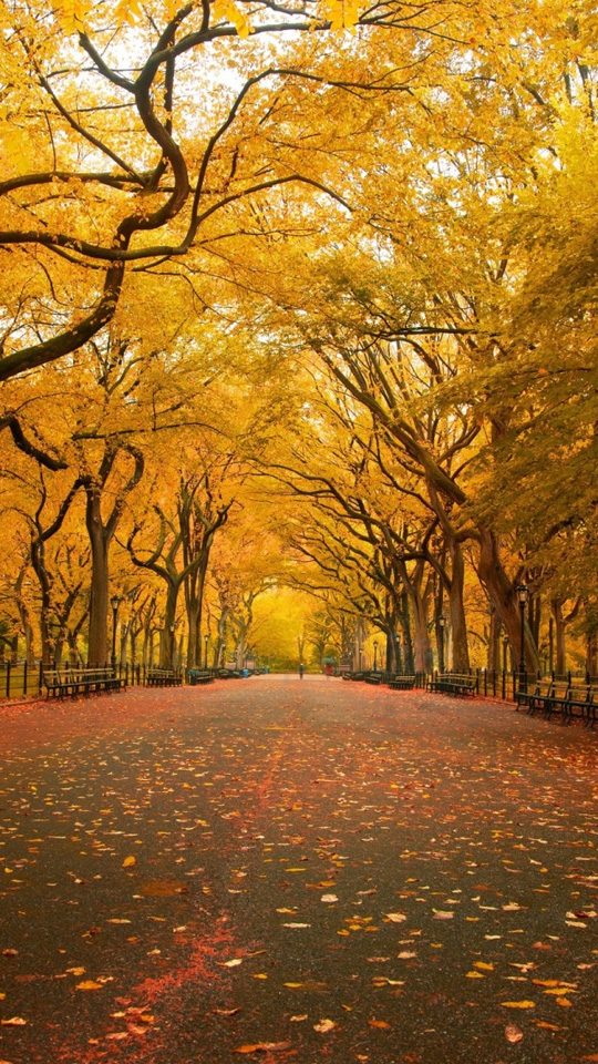Autumn Street Wallpaper