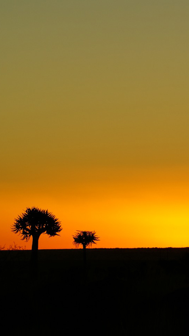 Sunset Silhouette Tree