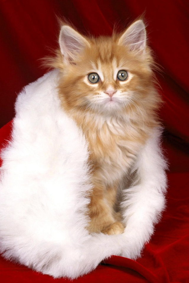 Cute Christmas Kitten