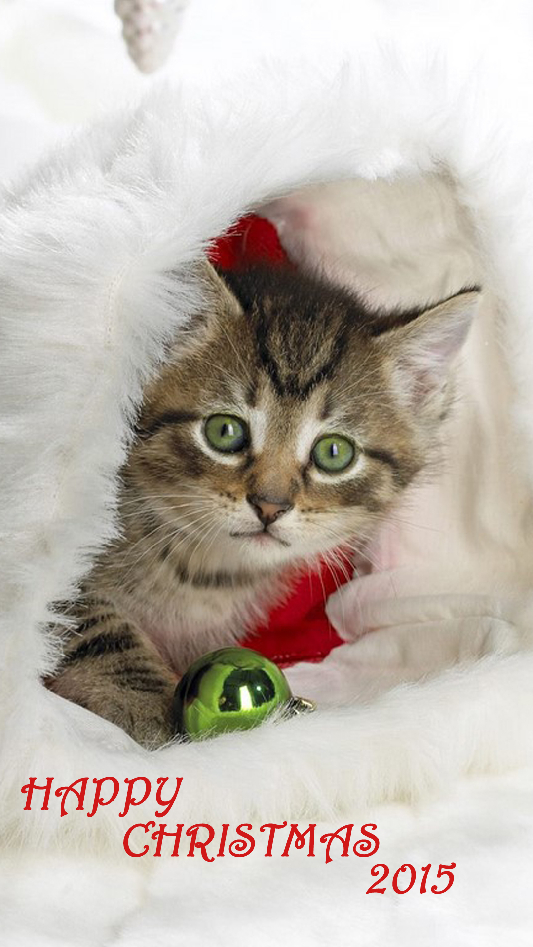 Cute Kitten With Bell
