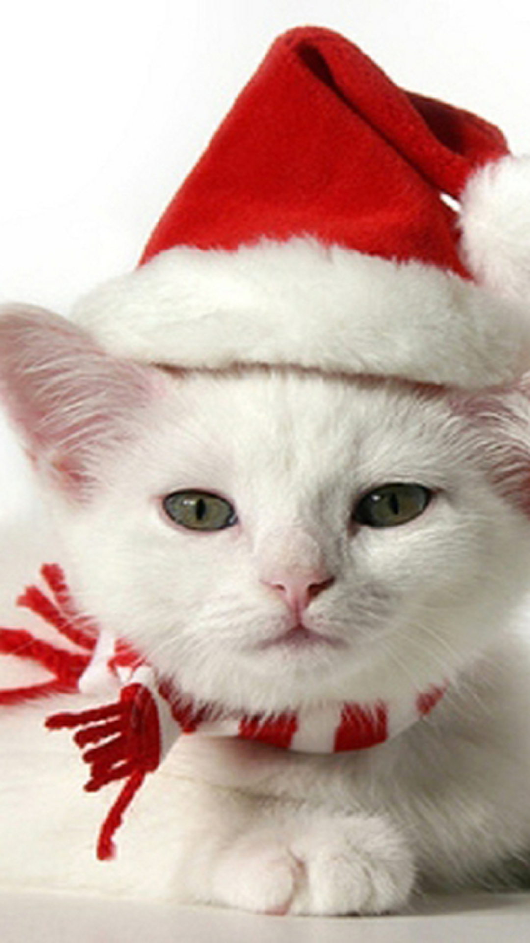 Cute Kitten With Christmas Hat