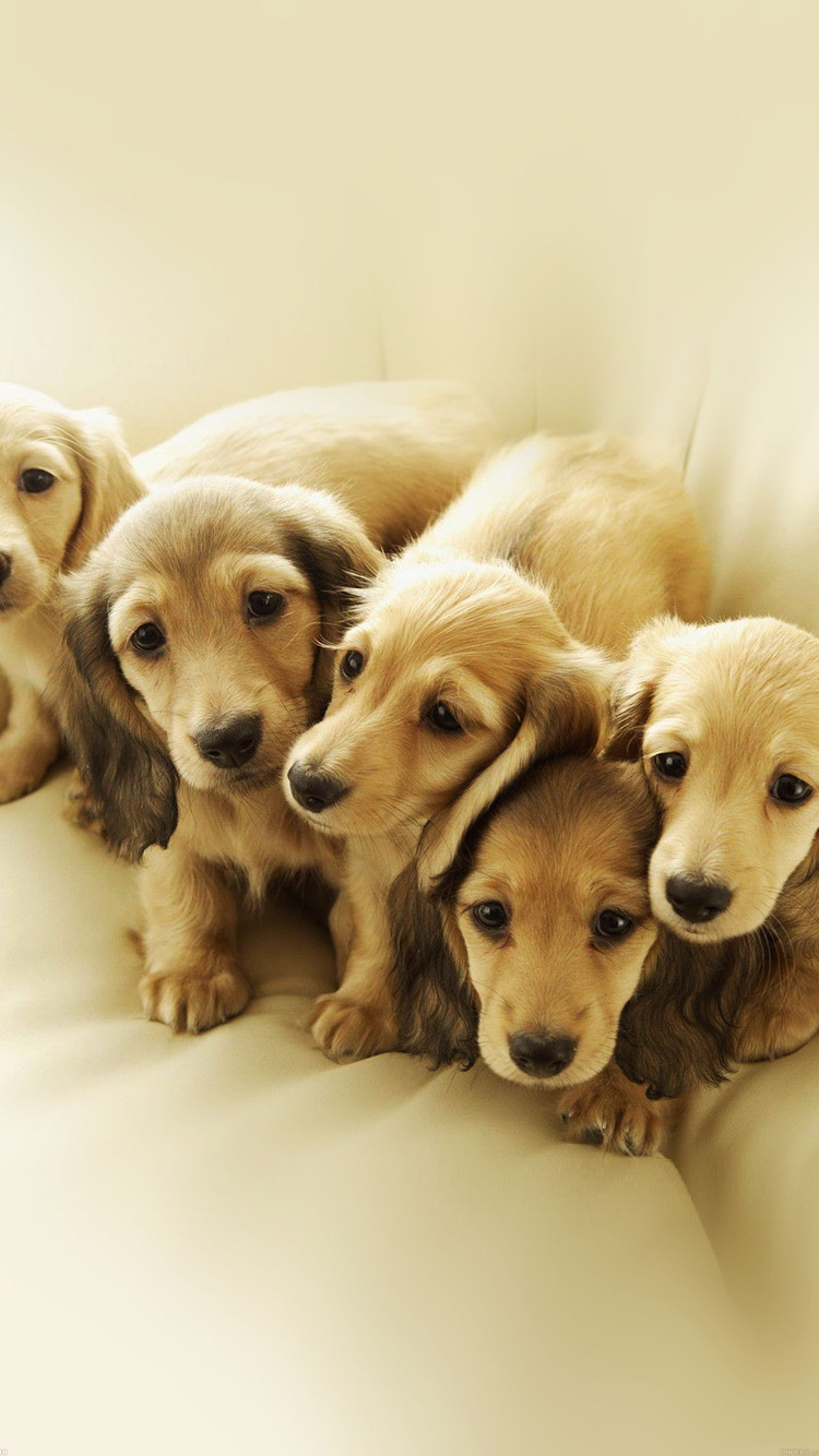 Cute Puppy Family