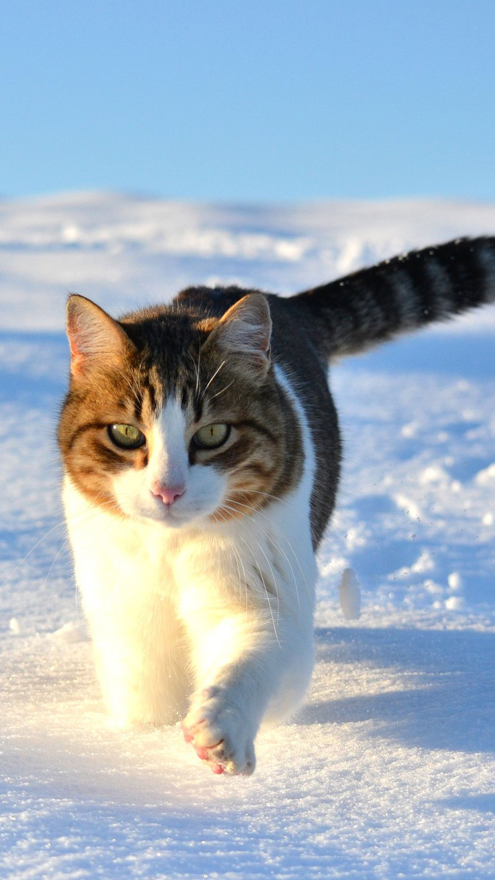 Cute Cat Snow Wallpaper