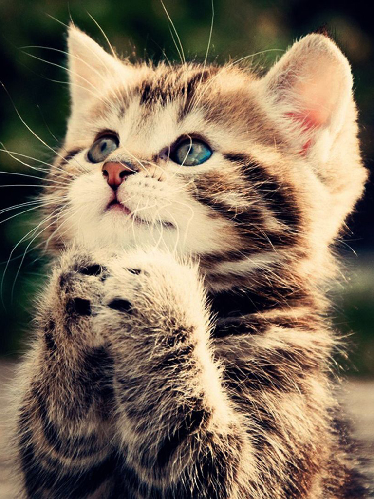 Cute Pussy Cat Praying