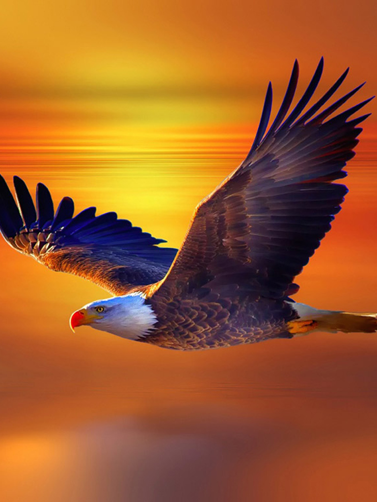 Eagle Sunset View