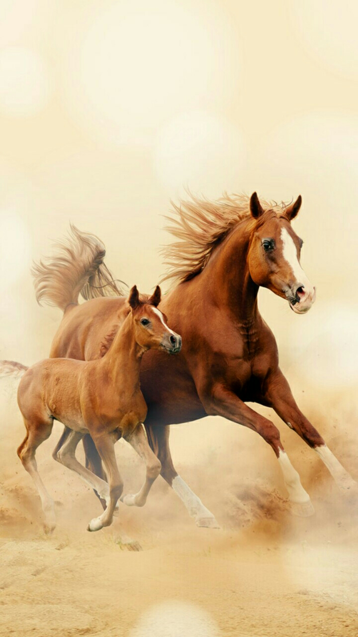 Running Horse Wallpaper