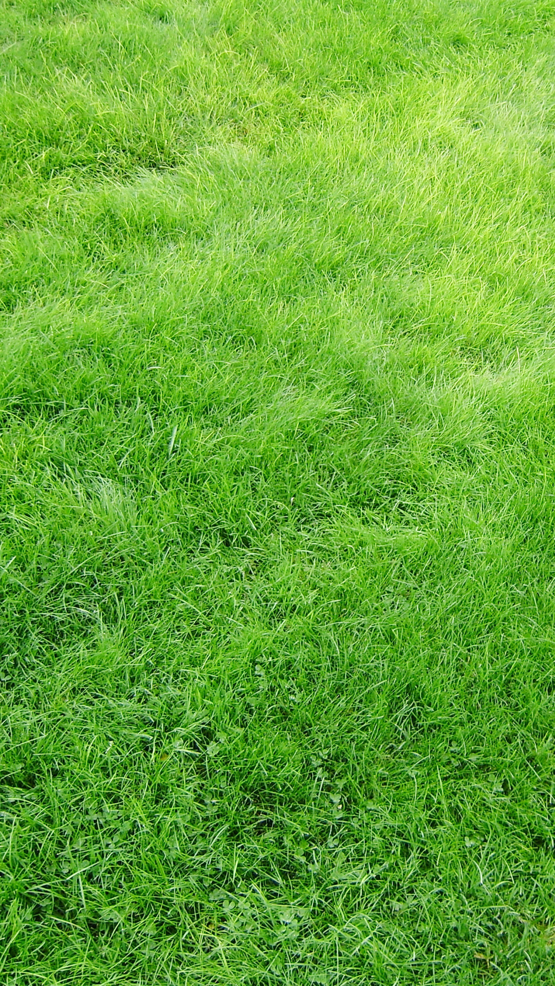 Beautiful Grass Texture