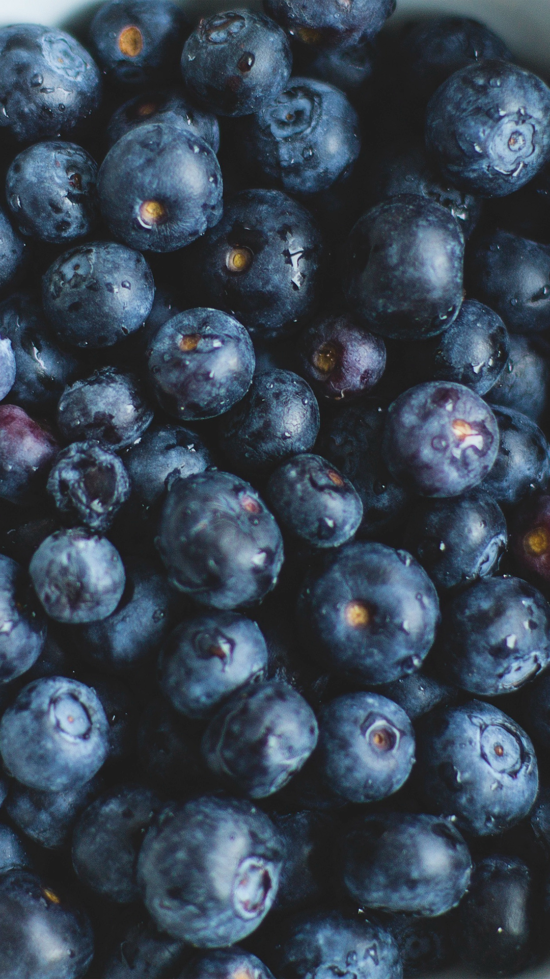 Sweet Blueberries Wallpaper