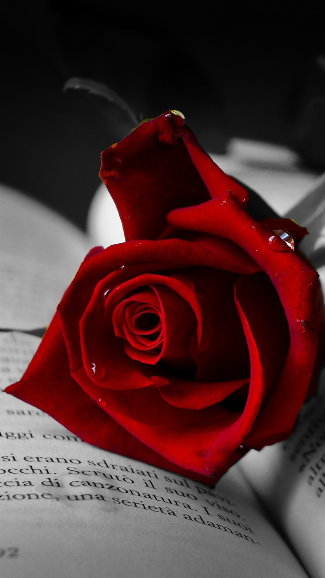 Beautiful Memorable Rose