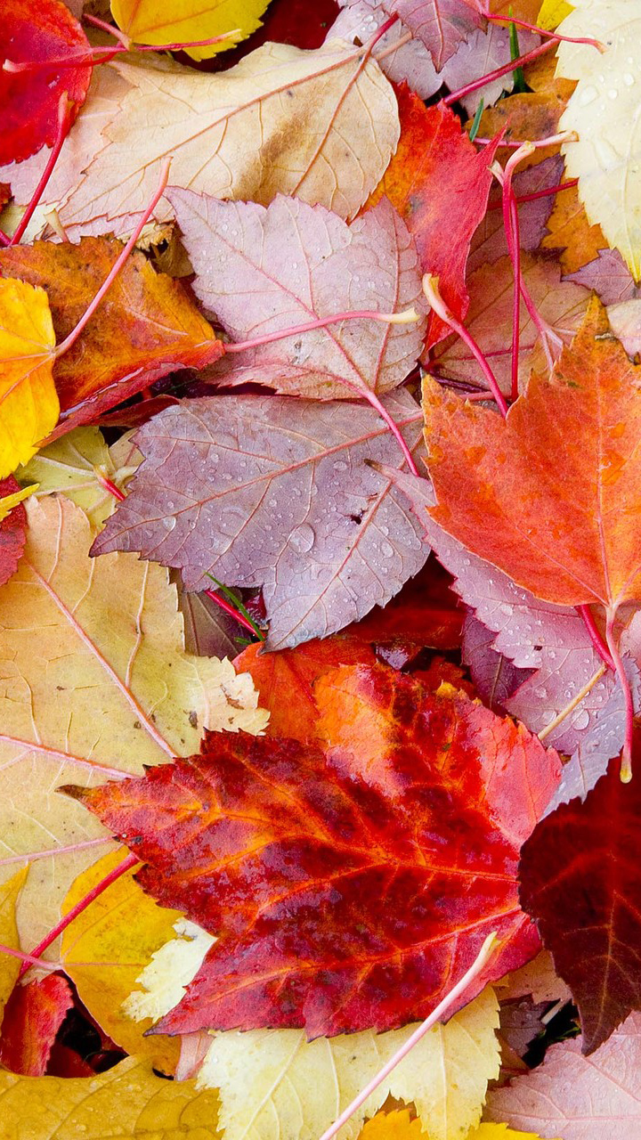 Colorful Leafs Picture