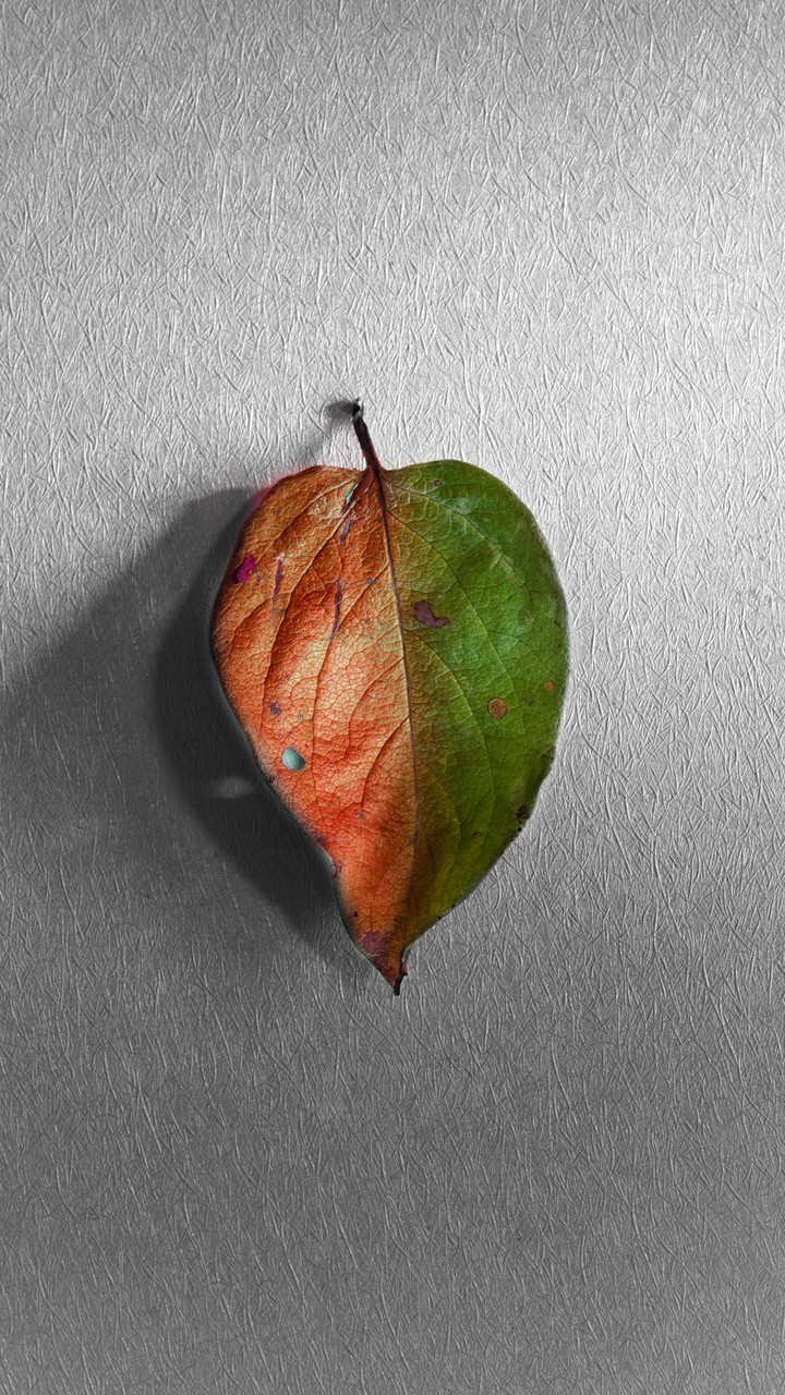 Two Colored Leaf