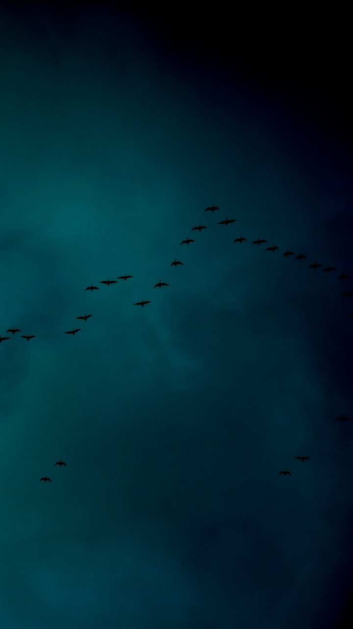 Beautiful Birds in Sky