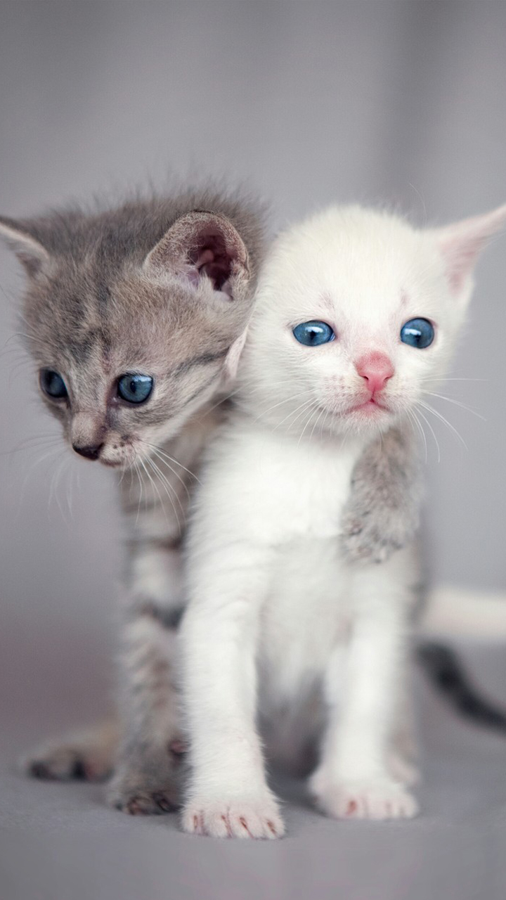 Beautiful Kitten Couple