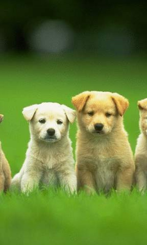 Cute Puppies Background Picture