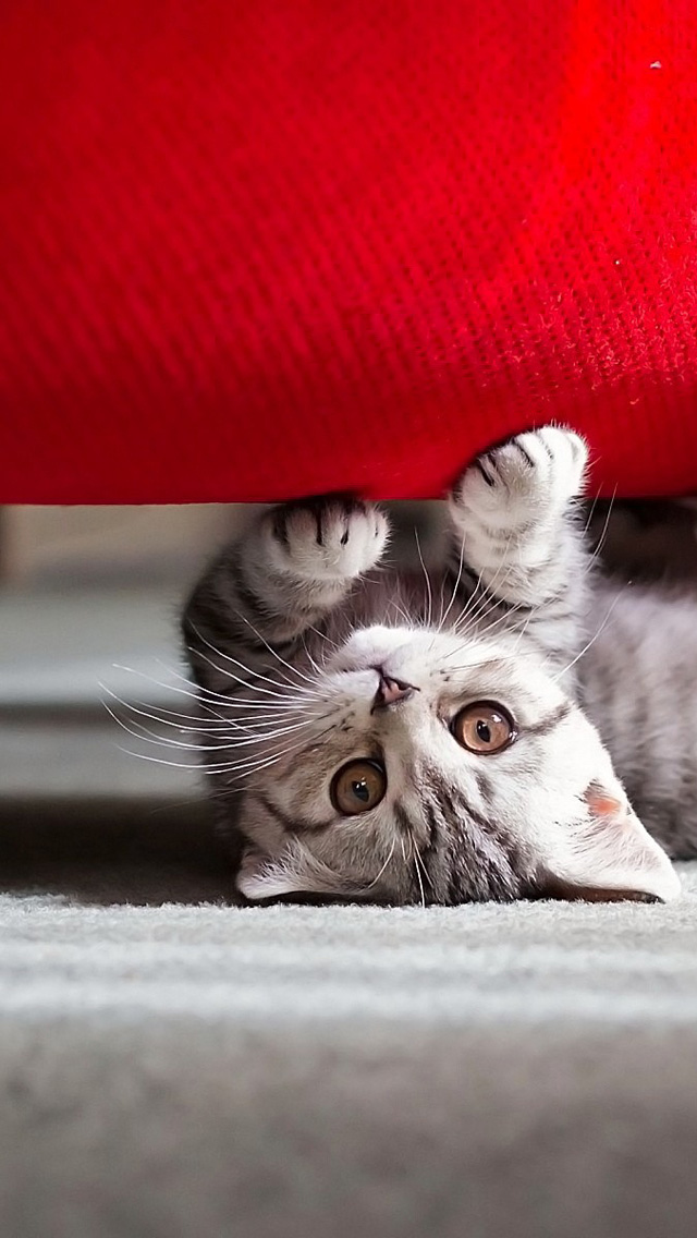 Cute Kitten Playing