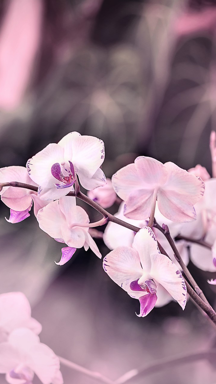 Light Purple Flower