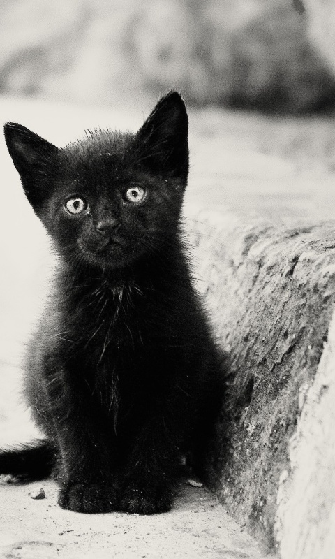 Lonely Black Kitten