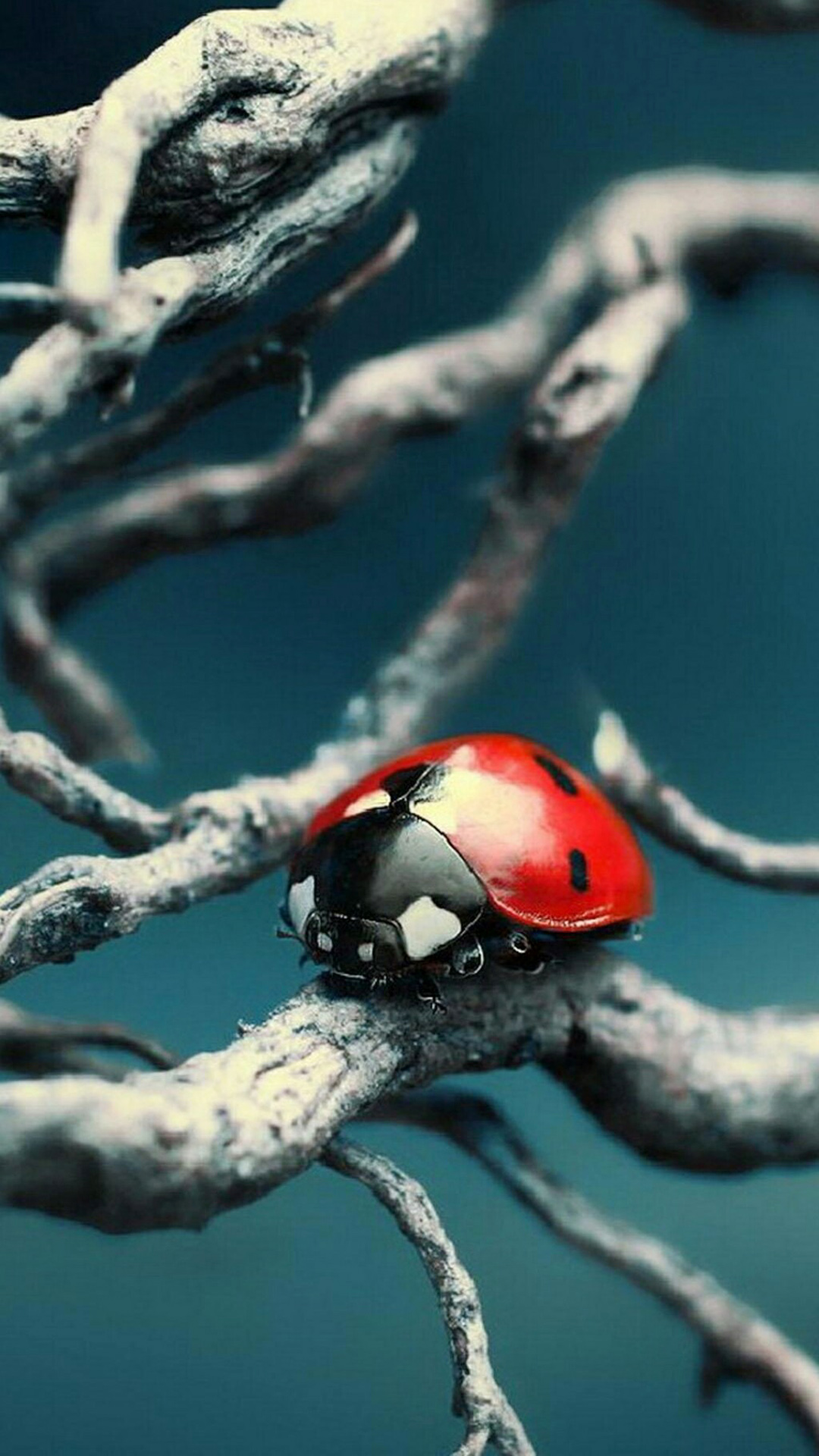 Red & Black Insect