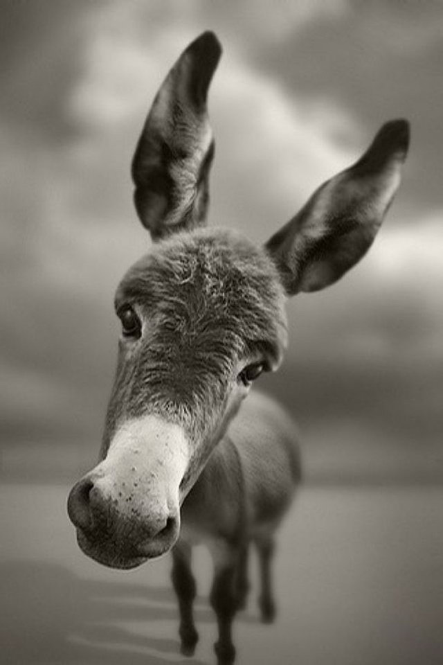 Cute Funny Donkey Wallpaper