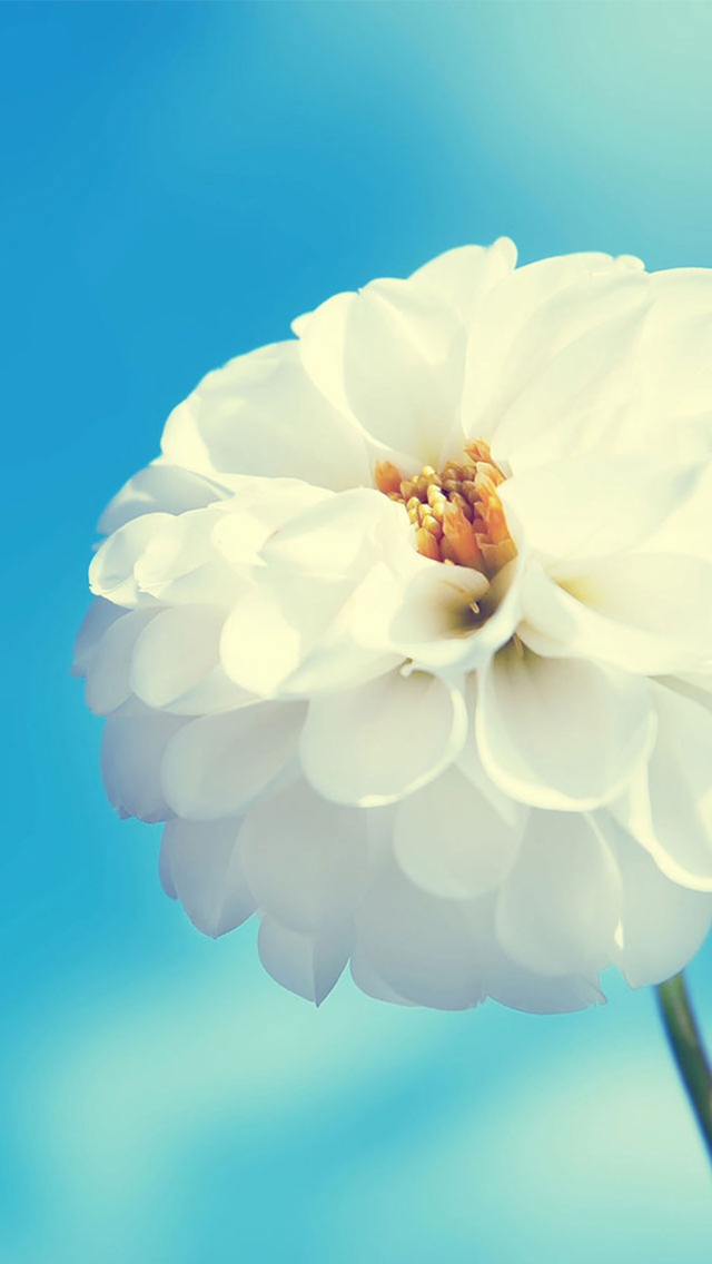 Cool Retina Flower Wallpaper