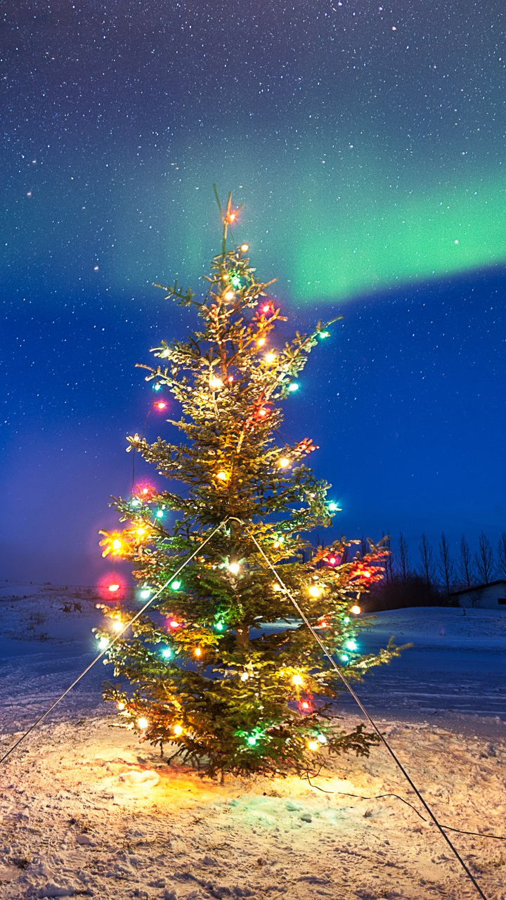 Christmas Tree in Ground