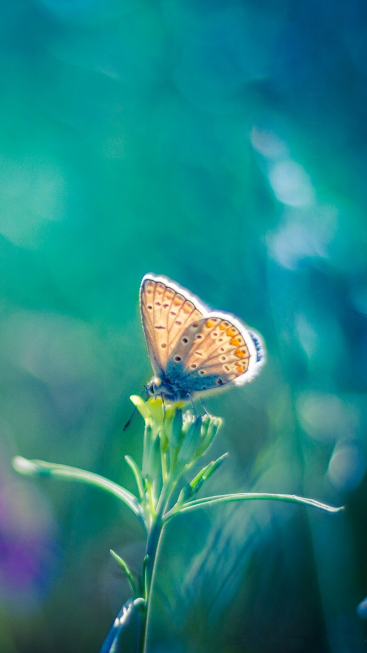 Macro Butterfly Picture
